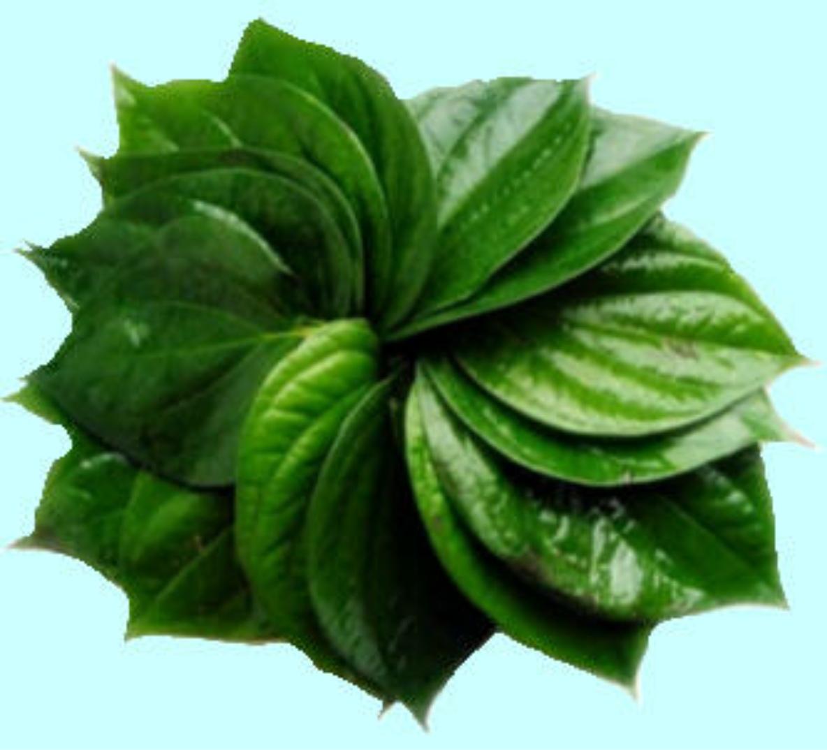 maycintadamayantixibb: Betel Leaves Meaning In Tamil